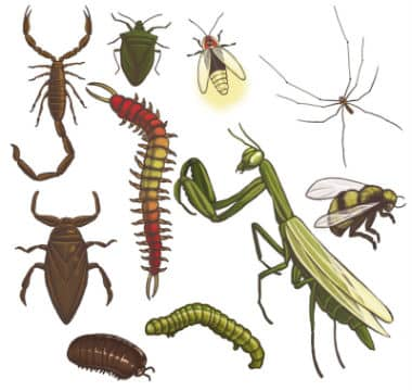 bug control Johanneburg