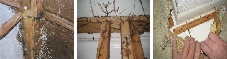 termites in Johannesburg