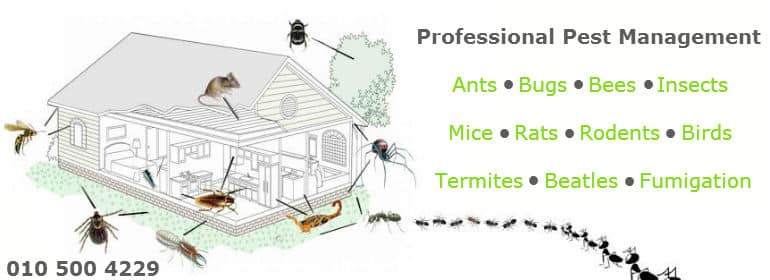 Fumigation services in Roodepoort