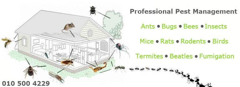 Fumigation & Pest Control Edenvale